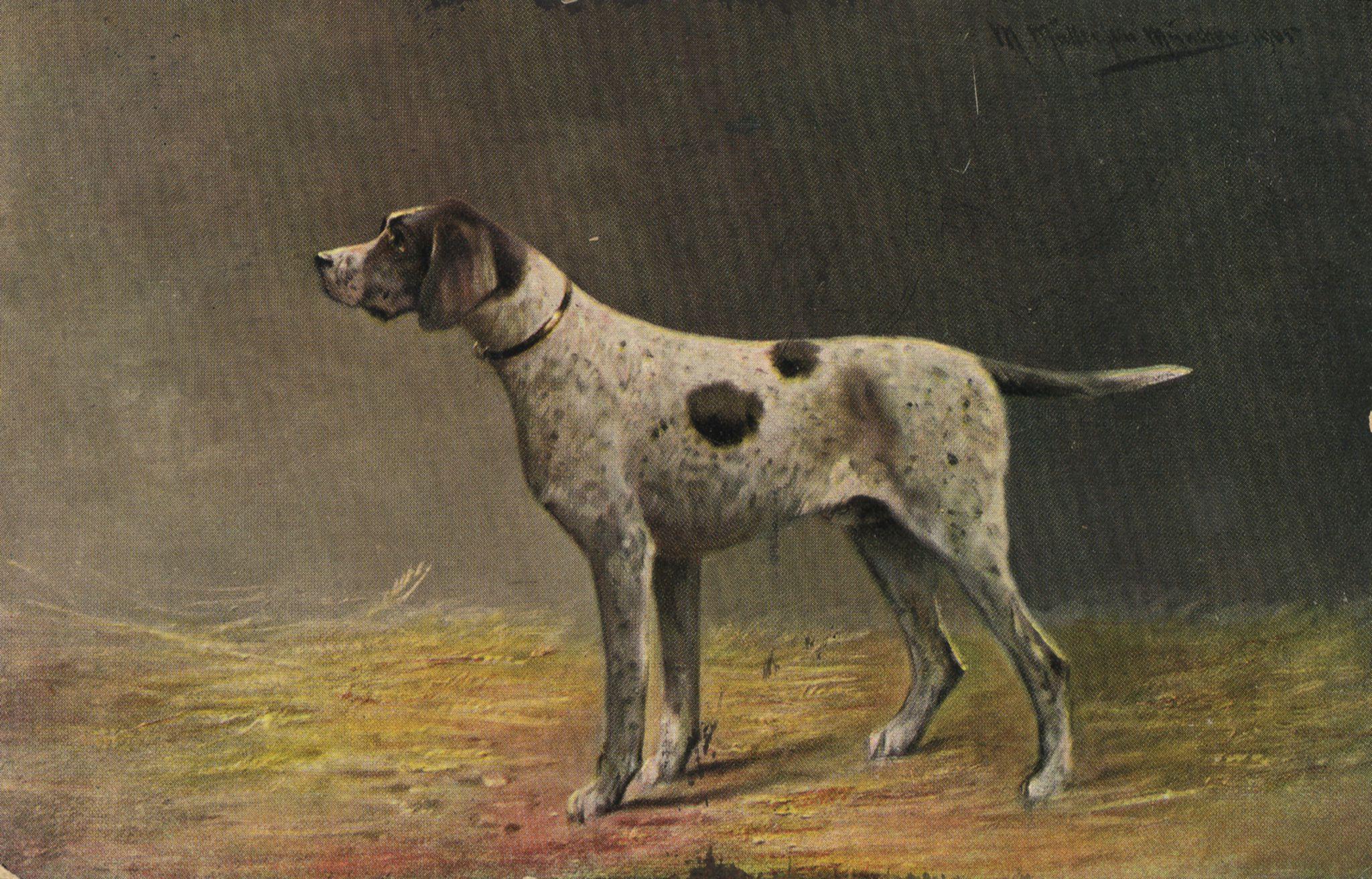 hunde  rassen  jagdhund