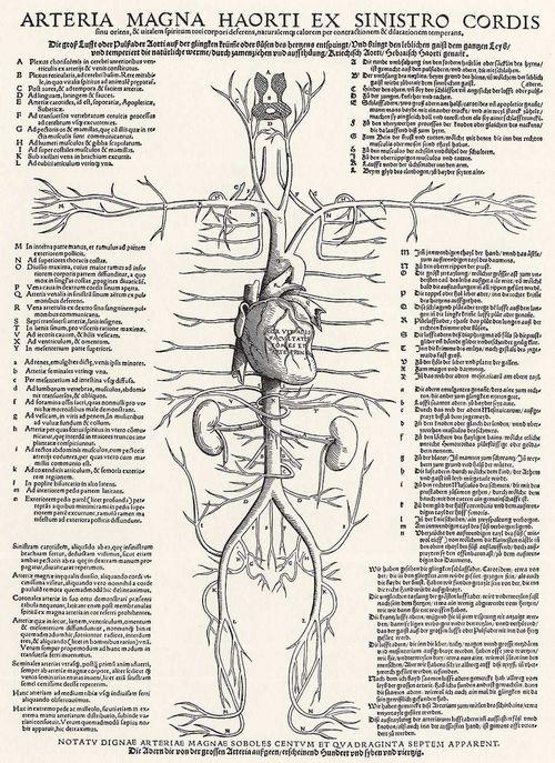 Anatomische Präparate