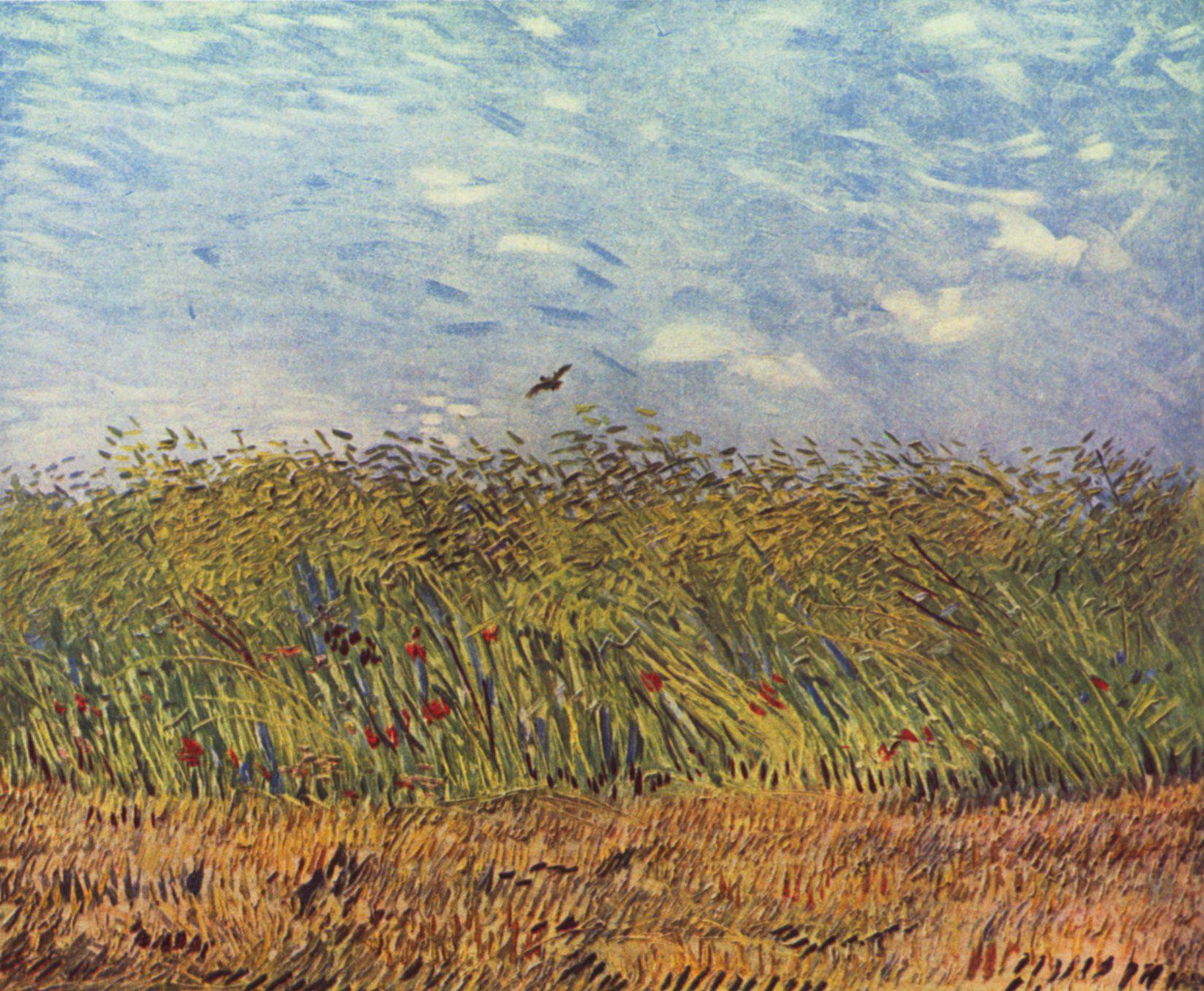 Gogh Vincent Willem Van Getreidefeld Mit Mohnblumen Und