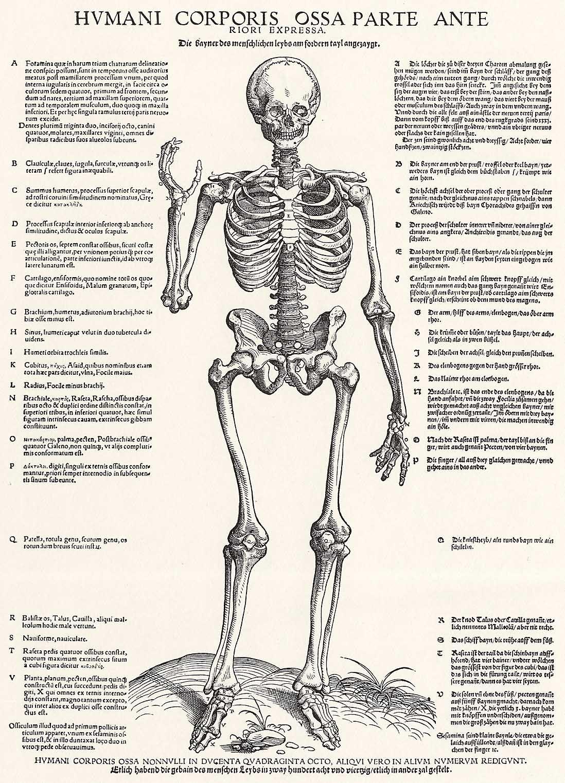 Großartig Corticospinal Darm Trakt Anatomie Galerie - Physiologie ...