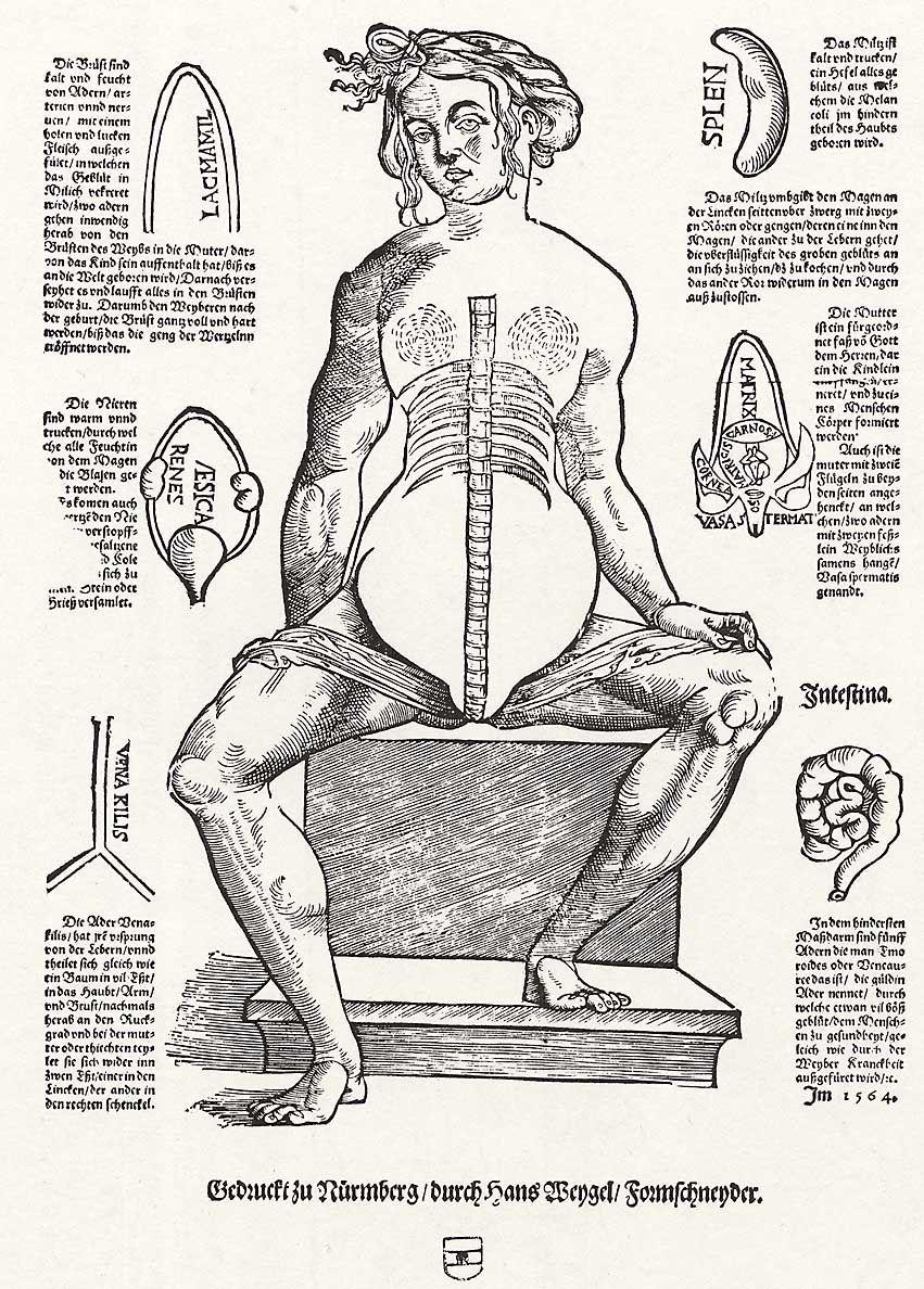 Weigel d. Ä., Hans: Anatomie der Frau - Zeno.org