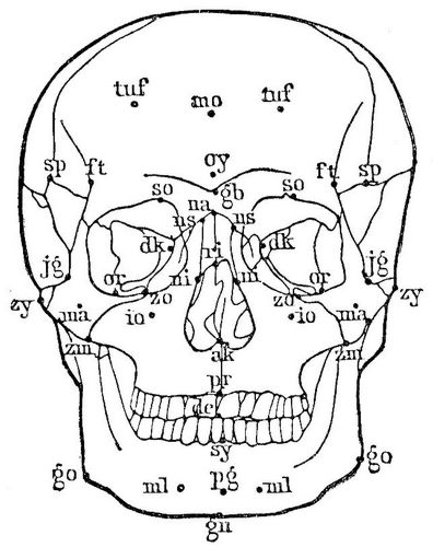 1. Norma frontalis.