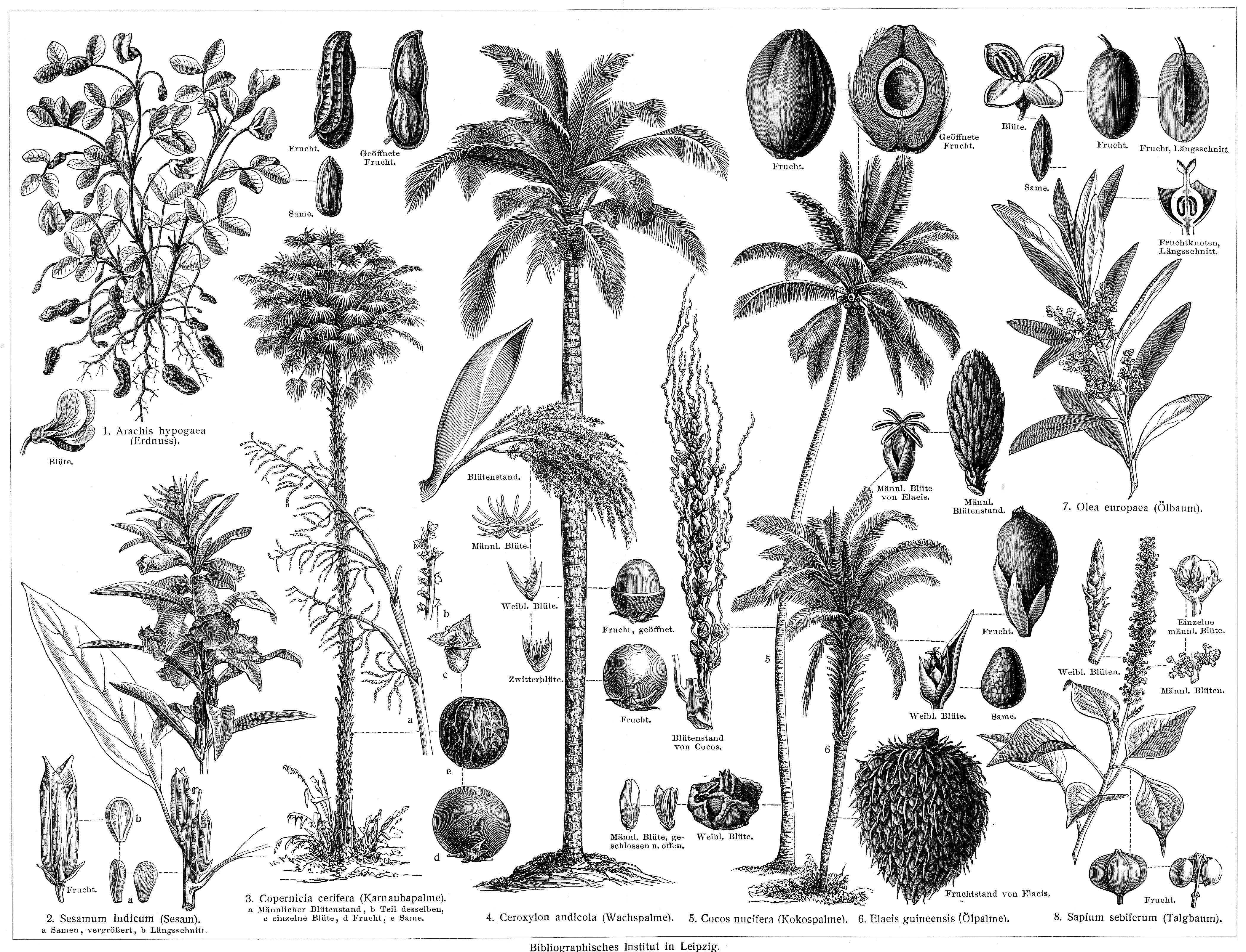 Zeichnungen pflanzen