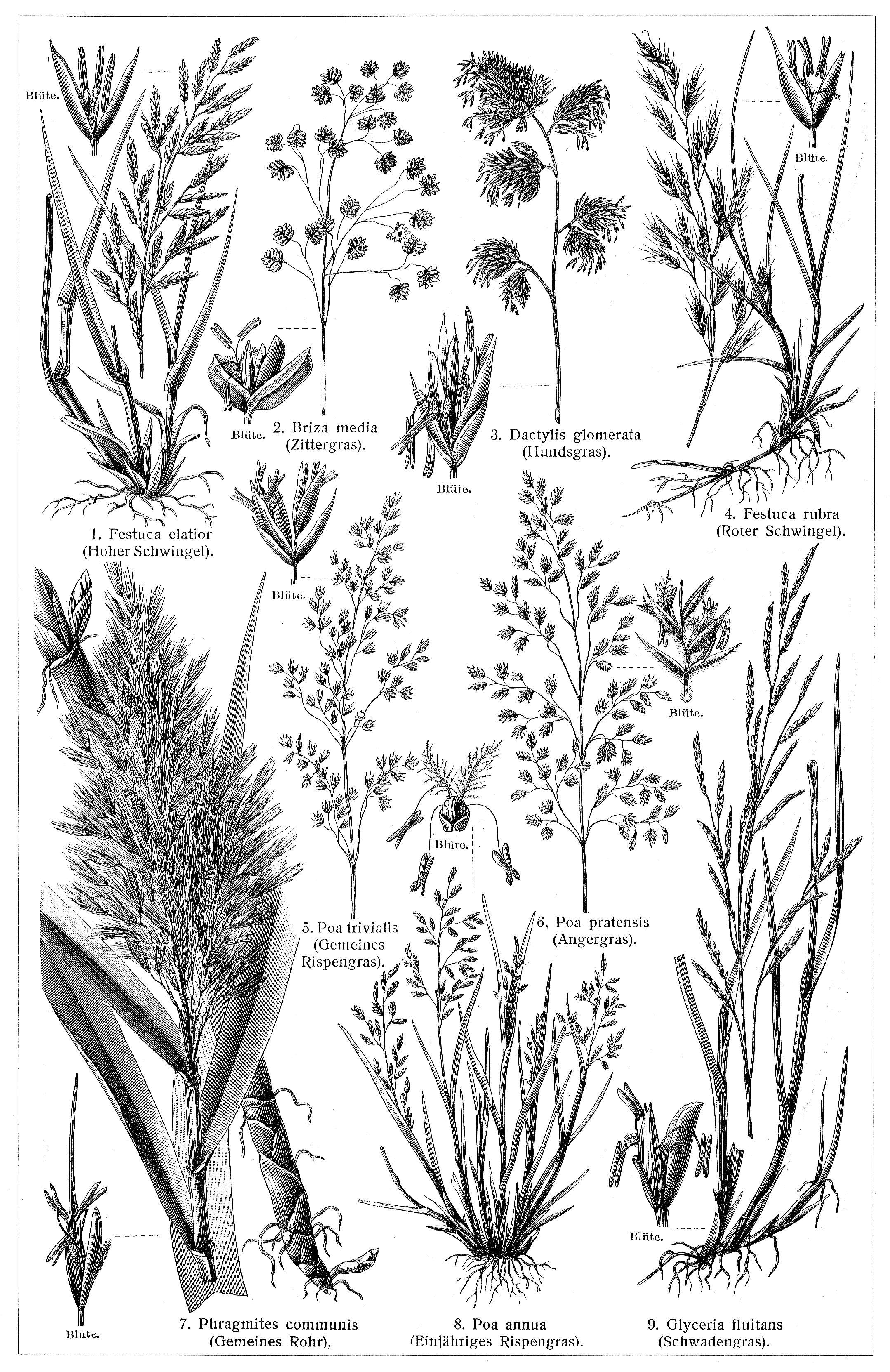Frisch Pflanzen Online Design