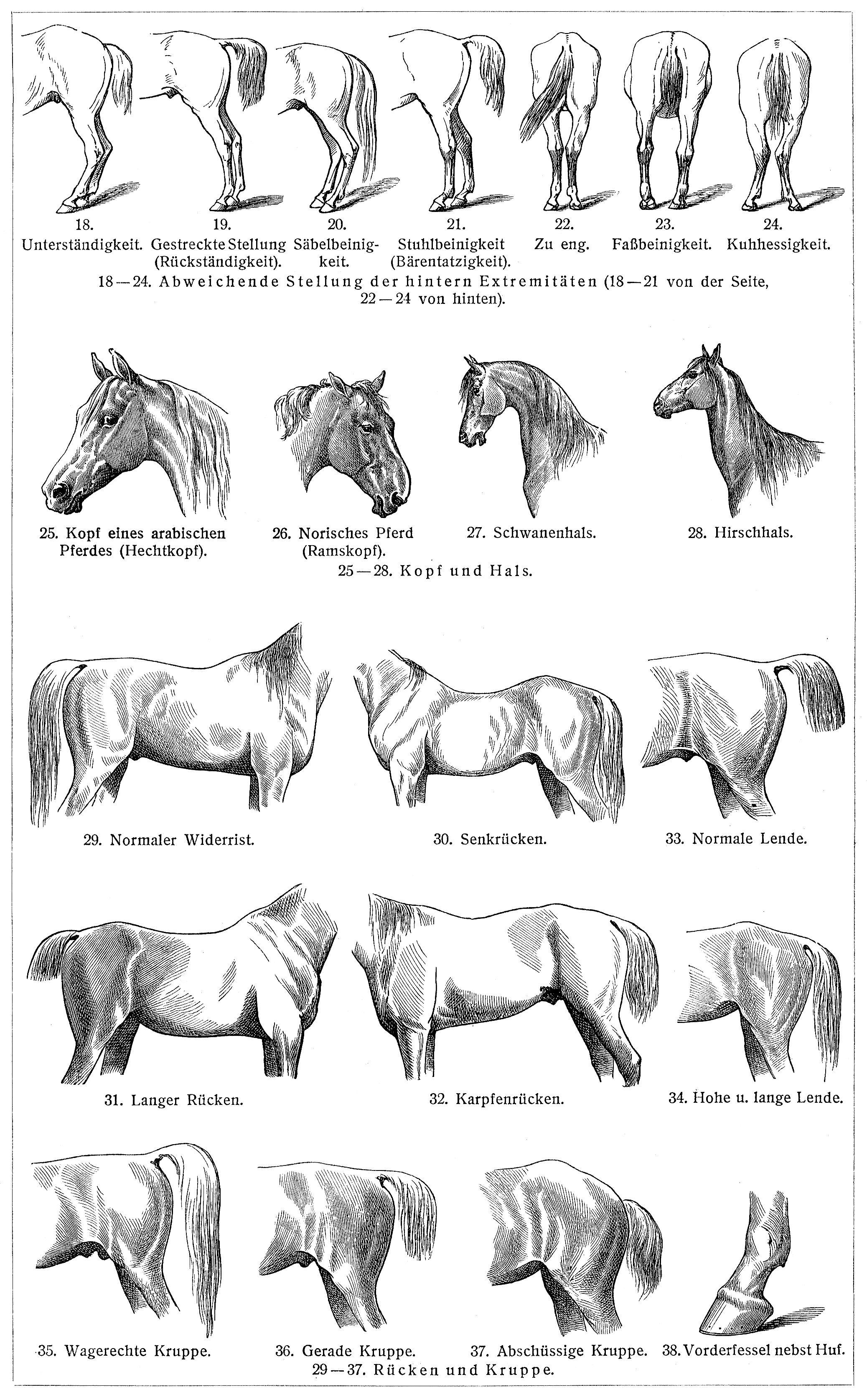 Pferde - Zeno.org
