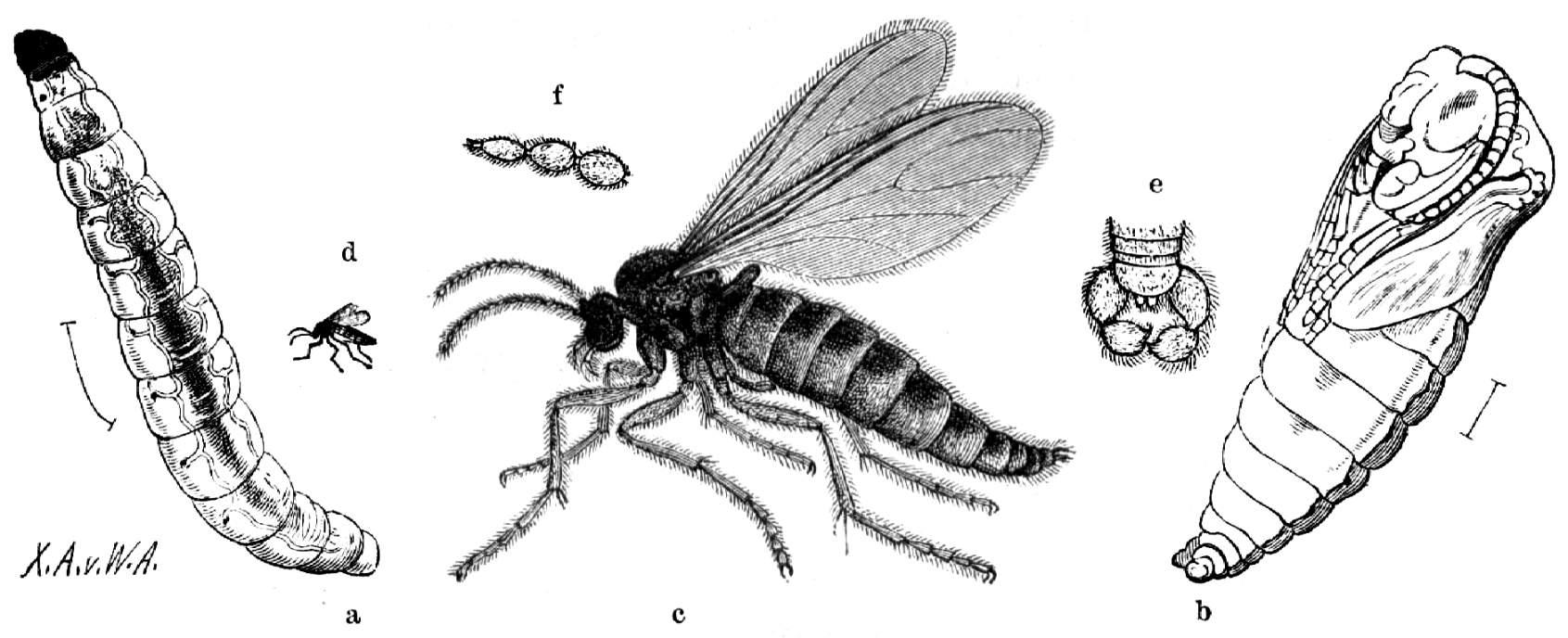 Brehm Alfred Brehms Thierleben Insekten Tausendfüßler Und